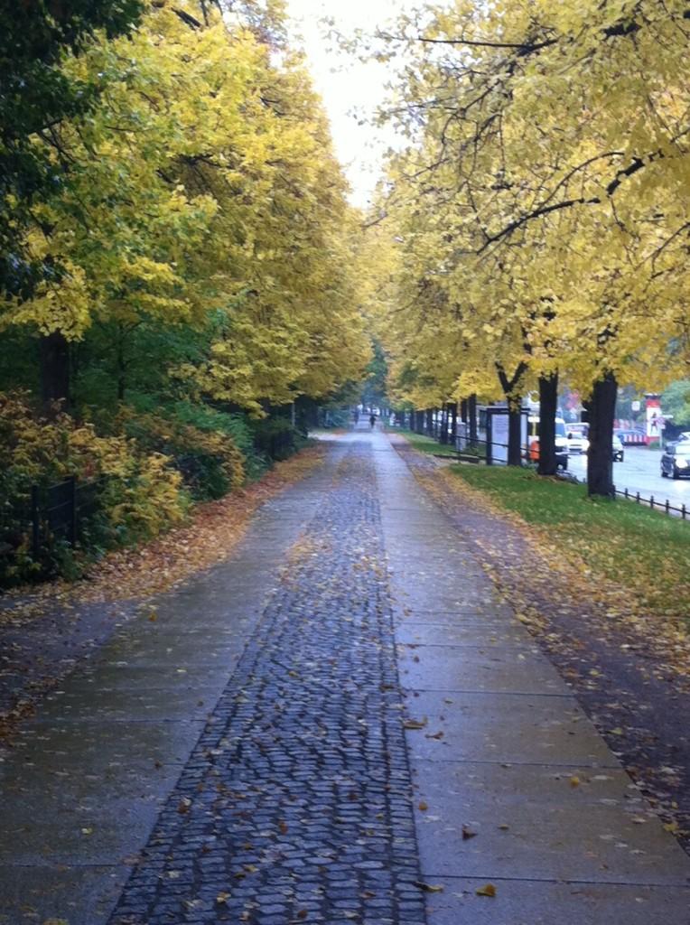 Joggen und Laufen im Herbst auf nassen Laub und Strassen