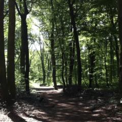 Zecken: Die Gefahr beim Laufen und wie man sich als Jogger schützt