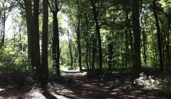 Wald, Straße, Bahn – Wo soll ich trainieren?