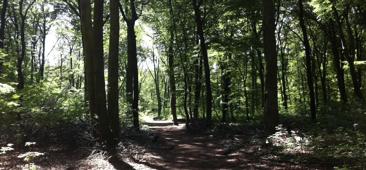 zecken-gefahr-jogger-wald
